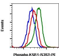 Phospho-KSR1 (Ser392) (Clone: 3A4) rabbit mAb PE conjugate