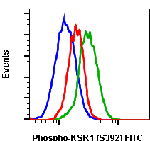 Phospho-KSR1 (Ser392) (Clone: 3A4) rabbit mAb FITC conjugate