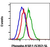 Phospho-KSR1 (Ser392) (Clone: 3A4) rabbit mAb SureLight conjugate