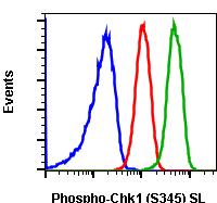 Phospho-Chk1 (Ser345) (Clone: R3F9) rabbit mAb SureLight488 conjugate