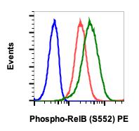 Phospho-RelB (Ser552) (Clone: A7) rabbit mAb PE conjugate