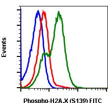 Phospho-Histone H2A.X (Ser139) (Clone: 1E4) rabbit mAb FITC conjugate