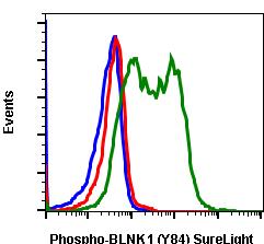 Phospho-BLNK (Tyr84) (Clone: H4) rabbit mAb SureLight488 conjugate
