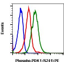 Phospho-PDK1 (Ser241) (Clone: F7) rabbit mAb PE conjugate