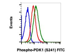Phospho-PDK1 (Ser241) (Clone: F7) rabbit mAb FITC conjugate
