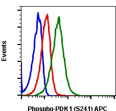Phospho-PDK1 (Ser241) (Clone: F7) rabbit mAb APC conjugate