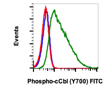 Phospho-c-Cbl (Tyr700) (Clone: E1) rabbit mAb FITC conjugate