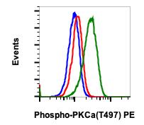 Phospho-PKCa (Thr497) (Clone: F1) rabbit mAb PE Conjugate