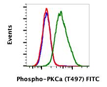 Phospho-PKCa (Thr497) (Clone: F1) rabbit mAb FITC Conjugate