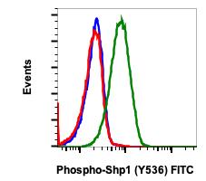 Phospho-Shp1 (Tyr536) (Clone: 2A7) rabbit mAb FITC conjugate