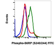 Phospho-S6-Ribosomal Protein (Ser240/244) (Clone: CD10) rabbit mAb FITC Conjugate