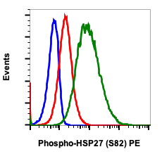 Phospho-HSP27 (Ser82) (Clone: CB2) rabbit mAb PE conjugate