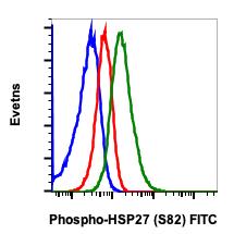 Phospho-HSP27 (Ser82) (Clone: CB2) rabbit mAb FITC conjugate