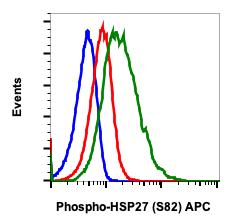 Phospho-HSP27 (Ser82) (Clone: CB2) rabbit mAb APC conjugate