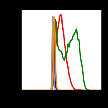 Phospho-Aurora A (Thr288)/Aurora B (Thr232)/Aurora C (Thr198) (Clone: CC12) rabbit mAb