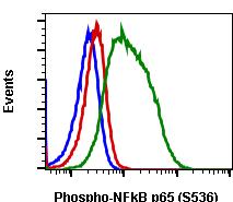 Phospho-NFKB p65 (Ser536) (Clone: B7) rabbit mAb