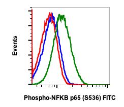 Phospho-NFKB p65 (Ser536) (Clone: B7) rabbit mAb FITC Conjugate