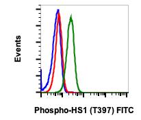 Phospho-HS1 (Tyr397) (Clone: F12) rabbit mAb FITC Conjugate