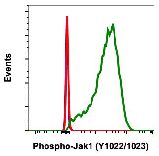 Phospho-Jak1 (Tyr1022/1023) (Clone: F11) rabbit mAb
