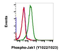 Phospho-Jak1 (Tyr1022/1023) (Clone: F11) rabbit mAb FITC Conjugate
