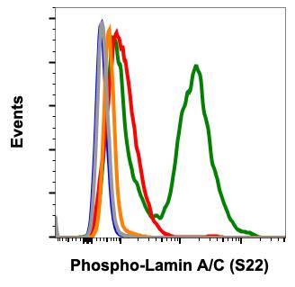 Phospho-Lamin A/C (Ser22) (Clone: CF12) rabbit mAb