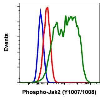 Phospho-Jak2 (Tyr1007/1008) (Clone: PB6) rabbit mAb