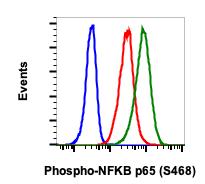 Phospho-NFKB p65 (Ser468) (Clone: B9) rabbit mAb