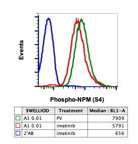 Phospho-NPM (Ser4) (Clone: A1) rabbit mAb