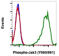Phospho-Jak3 (Tyr980/981) (Clone: E10) rabbit mAb