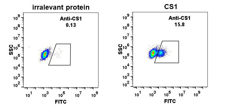 Anti-CS1 antibody(DM9), Rabbit mAb