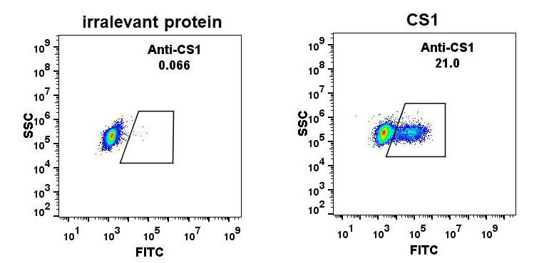 Anti-CS1 antibody(DM10), Rabbit mAb