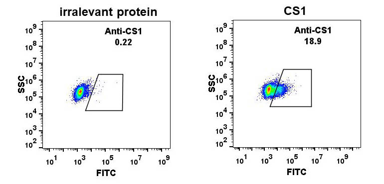 Anti-CS1 antibody(DM11), Rabbit mAb