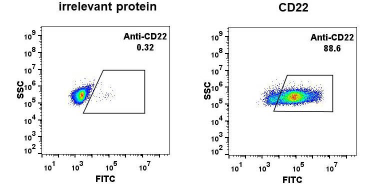Anti-CD22 antibody(DM13), Rabbit mAb