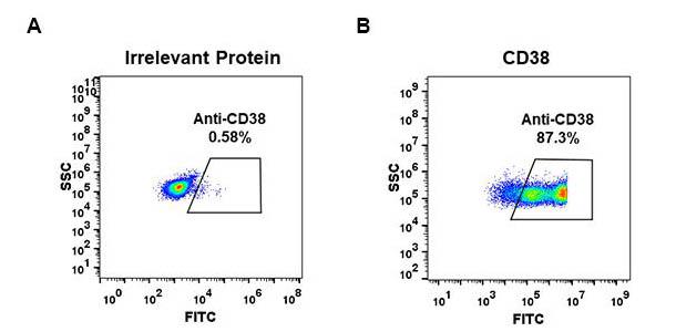 Anti-CD38 antibody(DM28), Rabbit mAb