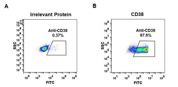 Anti-CD38 antibody(DM29), Rabbit mAb