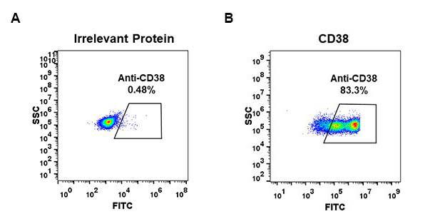 Anti-CD38 antibody(DM30), Rabbit mAb