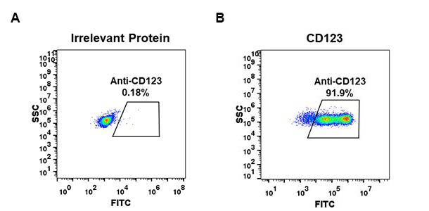 Anti-CD123 antibody(DM31), Rabbit mAb