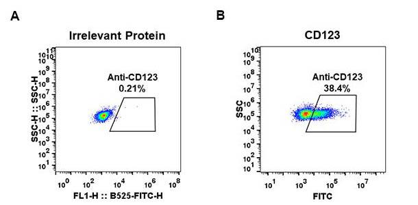 Anti-CD123 antibody(DM33), Rabbit mAb