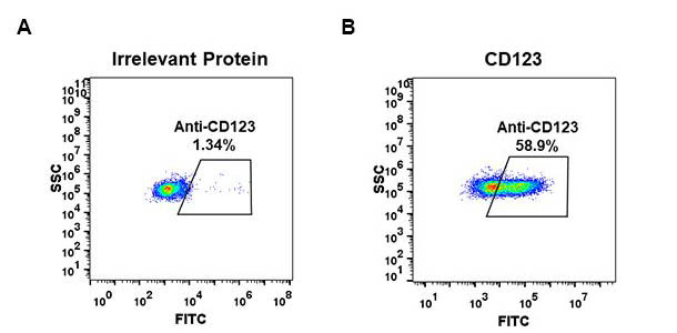 Anti-CD123 antibody(DM34), Rabbit mAb
