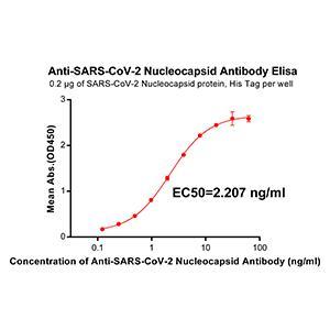Anti-SARS-CoV-2 Nucleocapsid antibody(DM37), Rabbit mAb