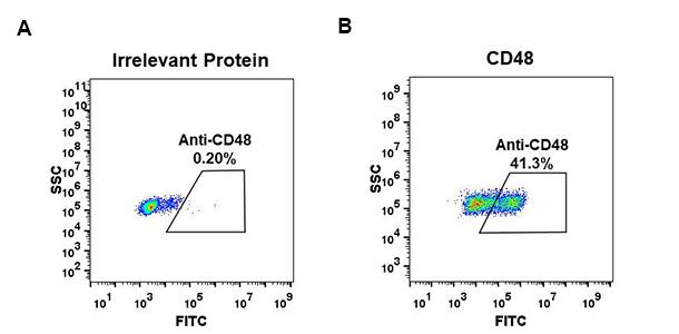 Anti-CD48 antibody(DM43), Rabbit mAb