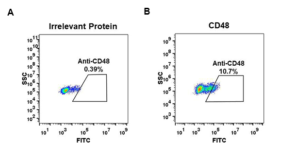Anti-CD48 antibody(DM44), Rabbit mAb