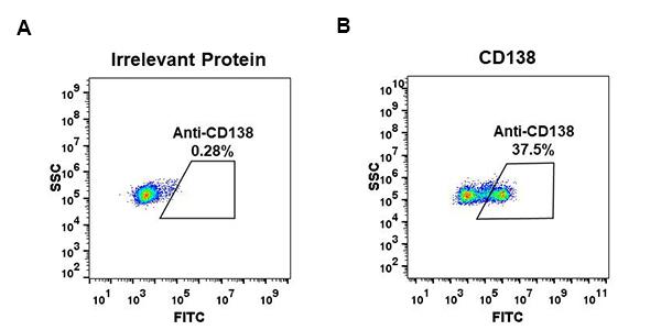 Anti-CD138 antibody(DM45), Rabbit mAb
