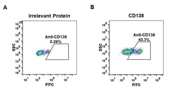 Anti-CD138 antibody(DM46), Rabbit mAb