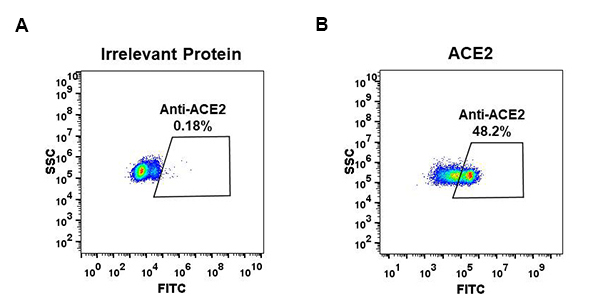 Anti-ACE2 antibody(DM48), Rabbit mAb