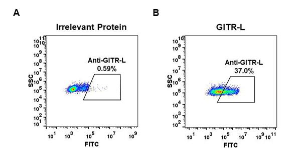 Anti-GITR-L antibody(DM52), Rabbit mAb
