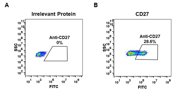 Anti-CD27 antibody(DM57), Rabbit mAb