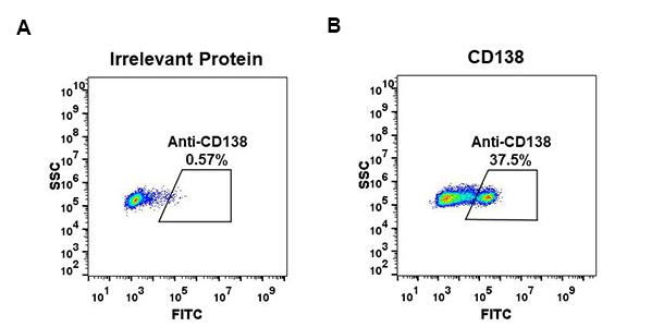 Anti-CD138 antibody(DM56), Rabbit mAb