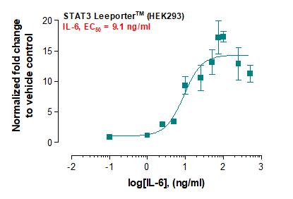 STAT3 Leeporter™ Luciferase Reporter-HEK293 Cell Line