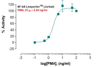 NF-kB Leeporter™ Luciferase Reporter-Jurkat Cell Line